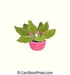 plat, vector, pictogram, van, altviool, plant, in, helder roze, pot., houseplant, met, kleine, bloeiende bloemen, en, groene, leaves., natuurlijke , huisdecor, element