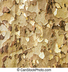 Platan bark, natural pattern photo