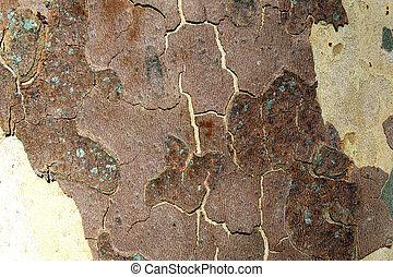 Platanus tree (sycamore) bark camouflage detail