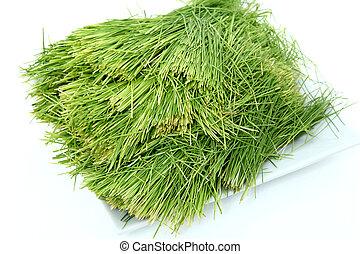 Plate of Wheatgrass