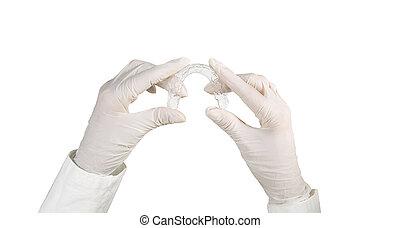 plateau, coulage, dentaire, -, dent, individu, tenant mains, duper