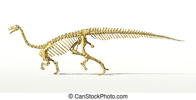 Plateosaurus dinosaur, full photo-realistic skeleton, scientifically correct. SIde view On white background. WIth drop shadow and clipping path included.