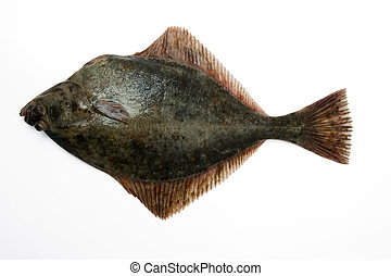 (Platichtys flesus) Baltic flounder, European flounder, Fluke, Flounder. Fresh caught lying on a light background