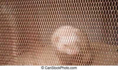Platinum mink in cell. breeding of fur-bearing animals -...
