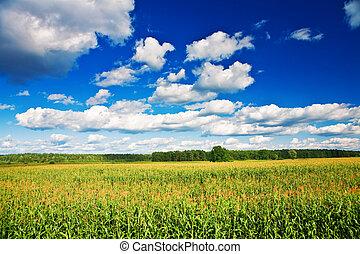 platteland, akker, koren