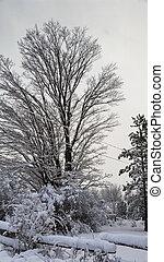 platteland, landelijk, winter, aanzicht