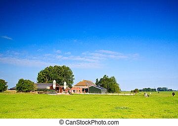 platteland, met, boerderij, en, koien, op, een, grasland