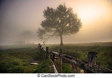 platteland, nevelig, morgen