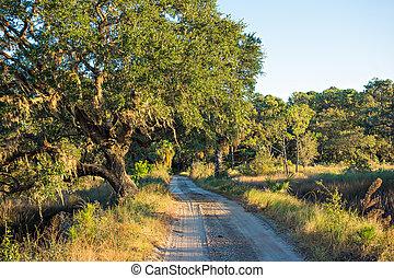 plattelandsweg, lined, met, eik, bomen