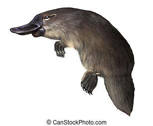 platypus - Digital illustration of a  platypus isolated