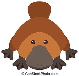 Platypus on white background