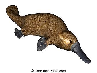 Platypus - 3D digital render of a semi-aquatic mammal native...