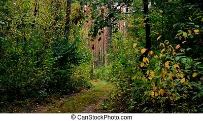 Beautiful play of alternating light and shadows in a forest in late summer or early autumn