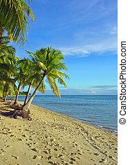playa, 2, fijian, árboles de palma