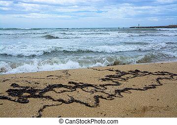 playa, alga, tempestuoso