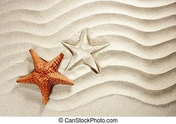 playa, blanco, ondulado, arena, estrellas de mar, vacaciones del verano