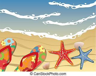 playa, cambia de dirección, conchas