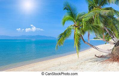 playa, coco, maeman, koh, tropical, tailandia, palm., playa...
