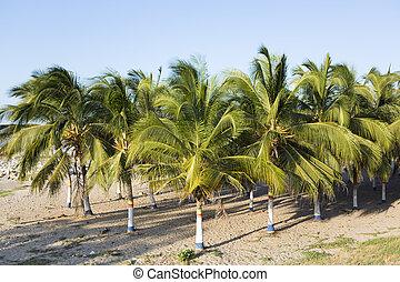 playa, colombia, palma, coloreado, árboles