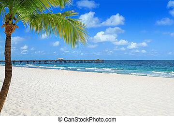 playa, con, palmera