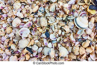 playa, conchas de mar, multitud