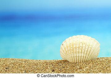 playa de la cáscara, mar