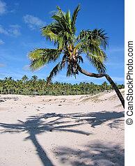 playa del anakena, de, isla de pascua