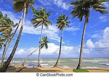 playa, dominicano, samana, península, república, terrenas, las