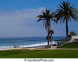 playa, dos, palmas, gente
