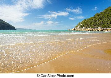 playa, ensenada, sealers