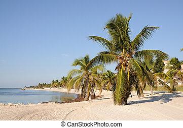 playa, estados unidos de américa, llaves, oeste, llave ...