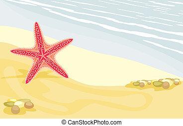 playa, estrellas de mar, arenoso