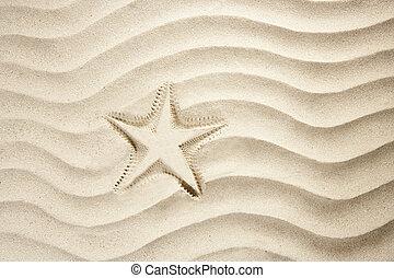 playa, estrellas de mar, impresión, blanco, caribe, arena, verano
