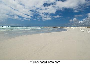 playa, islas, galapagos, tortuga, ecuador