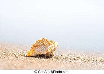 playa, macro, arena, cáscara, tiro