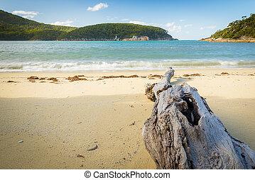 playa, madera flotante