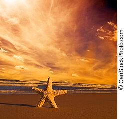 playa, ocaso, estrellas de mar