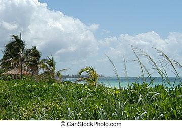 playa, palmas