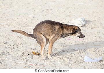 playa, perro,  scat