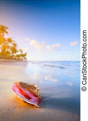 playa tropical, cáscara, arte