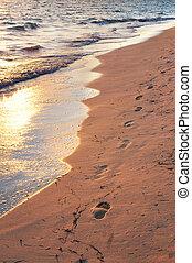 playa tropical, con, huellas