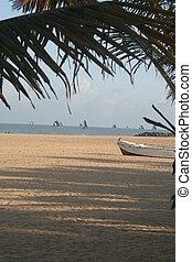 playa tropical, con, palmera, y, barcos