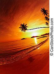 playa tropical, en, ocaso