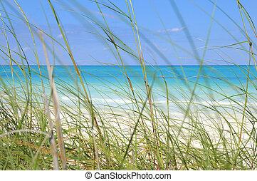 playa tropical, y, pasto o césped