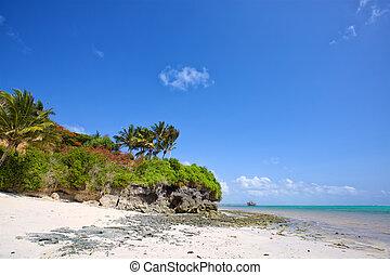 playa tropical, zanzibar