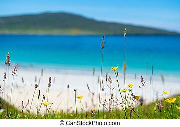 playa, turquesa, primavera, scotland., arriba, luskentyre, ...