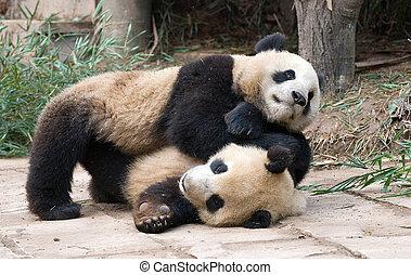 Playfighting Pandas