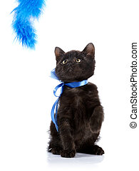 Playful black kitten with a blue tape.
