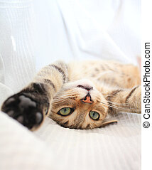Adorable funny playful cat