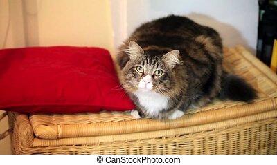 Playful cat on the basket